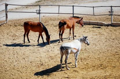 Centre d'élevage  pour chevaux Aubagne
