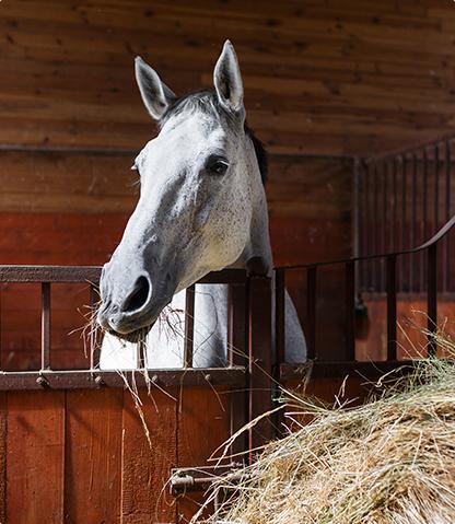 Les pensions pour chevaux